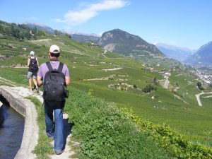 Hiking through vineyards
